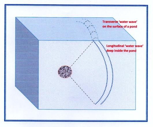 trans & longi waves